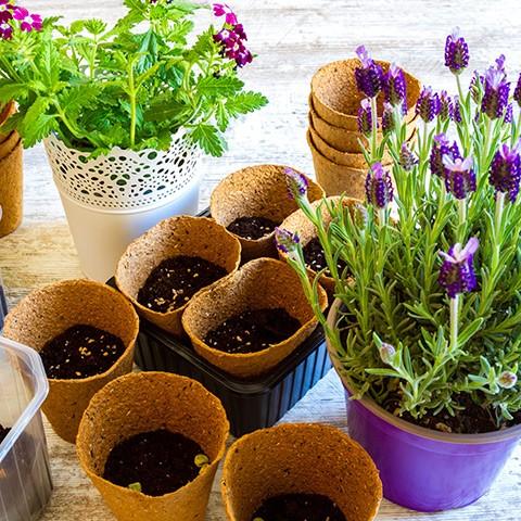 A Zöldövezet program által támogatott növények