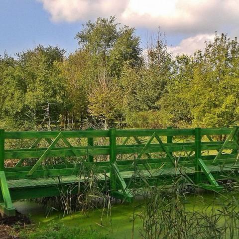 Zöld Híd halasi Környezetvédők Egyesülete